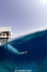 Diving into crystal waters in the Gulf of Aqaba by Camilla Floros